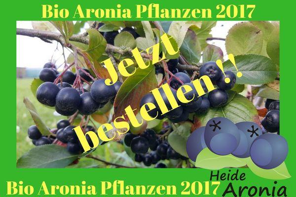 Bio Aronia Pflanzen 2017
