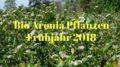 Bio Aronia Pflanzen 2018
