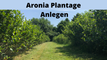 Aronia Plantage Anlegen